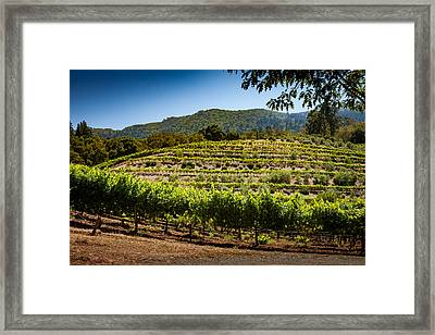 California Vineyard Framed Print by Robert Davis