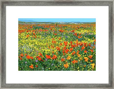 Framed Print featuring the photograph California Wildflower Super Bloom by Ram Vasudev