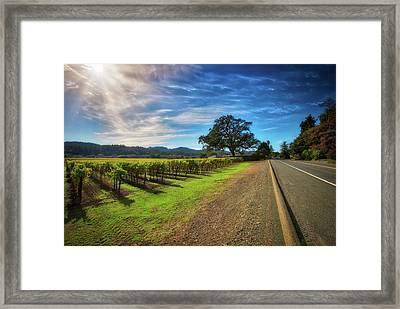California Wine County Road- Sonoma Vineyard And Lone Oak Tree Framed Print by Jennifer Rondinelli Reilly - Fine Art Photography