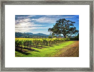 California Wine County - Sonoma Vineyard And Lone Oak Tree Framed Print by Jennifer Rondinelli Reilly - Fine Art Photography