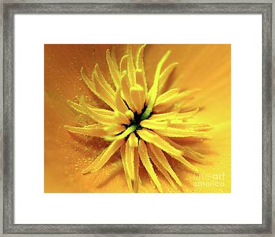 Californian Poppy Macro Framed Print by Baggieoldboy