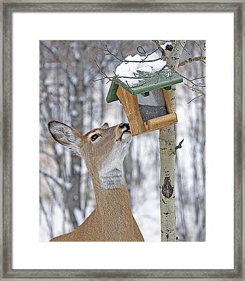 Call Me Tweety Framed Print