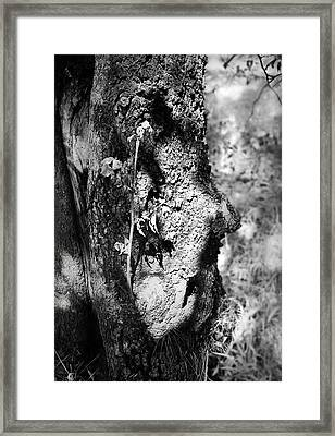 Call Of The Elder Framed Print
