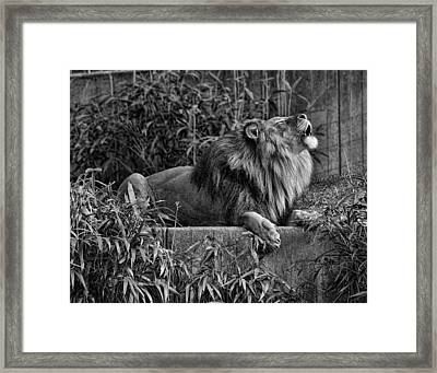 Call Of The Wild Bw Framed Print by Keith Lovejoy