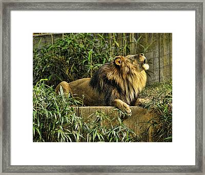 Call Of The Wild Framed Print by Keith Lovejoy