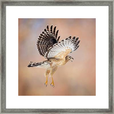 Call Of The Wild Square Framed Print by Bill Wakeley