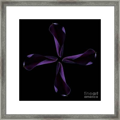 Calla Cross Framed Print by Steve Purnell