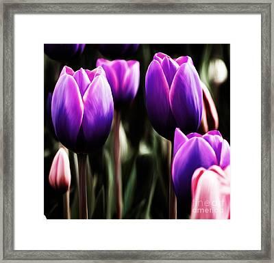 Calla In Purple Framed Print