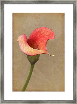 Calla In Red Framed Print by Jurgen Lorenzen