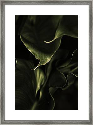 Calla Leaves Framed Print
