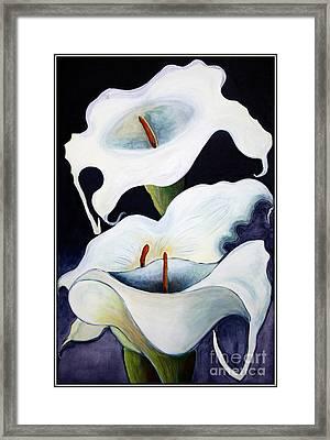Calla Lilies.. Framed Print