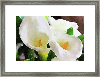 Calla Lilly Closeup  Framed Print by Pedro Vit