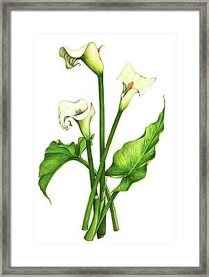 Framed Print featuring the painting Calla Lilly by Heidi Kriel