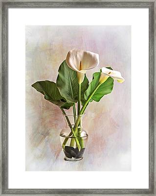 Calla Lily Stilllife Framed Print by Wes and Dotty Weber