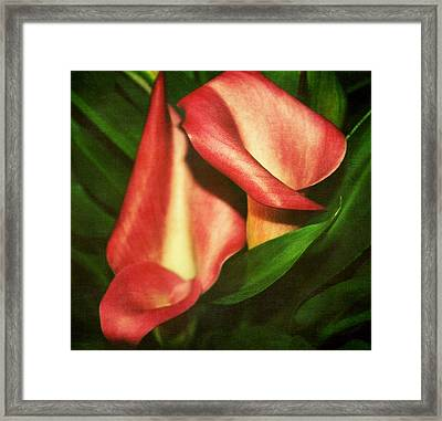 Calla Lillys Framed Print by Cathie Tyler