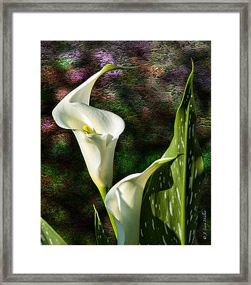 Calla Lily - P. Bright Framed Print