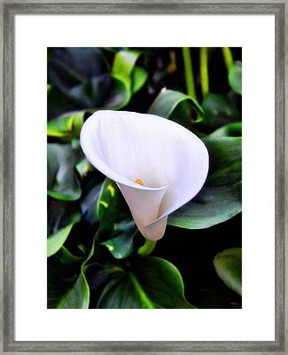Framed Print featuring the photograph Calla Lily by Glenn McCarthy
