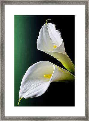 Calla Lily Green Black Framed Print