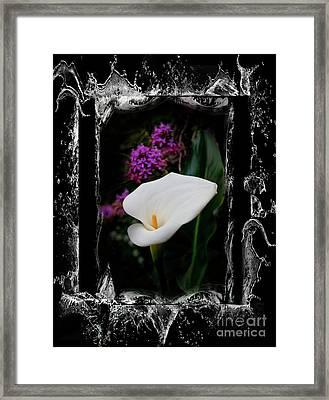 Calla Lily Splash Framed Print by Al Bourassa