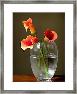 Calla Lily Stems Framed Print