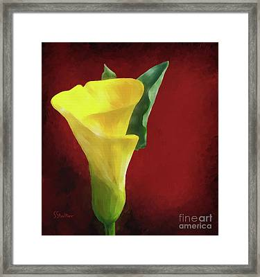 Calla Lily - Yellow Framed Print by Shirley Stalter