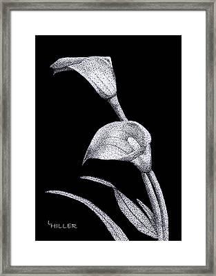 Calla Framed Print by Linda Hiller