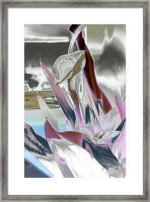 Calla Framed Print by Robert Meanor