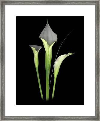 Calla Framed Print by Sandi F Hutchins