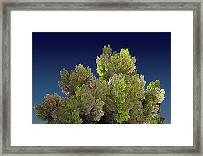 Callahan Grove Spring Framed Print