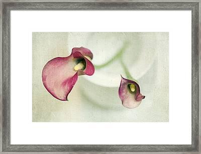 Callies Framed Print by Rebecca Cozart