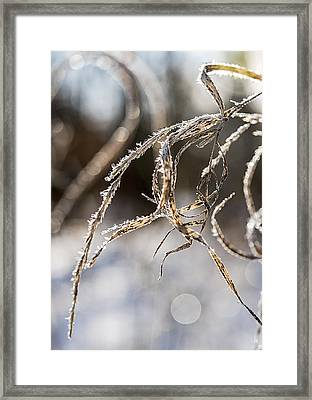 Framed Print featuring the photograph Calligraphy In The Grass by Annette Berglund