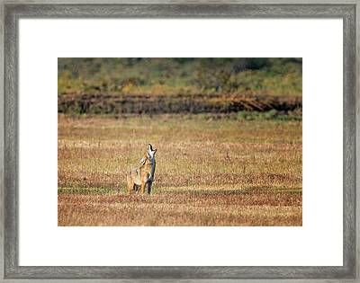 Calling For Backup Framed Print by Loree Johnson