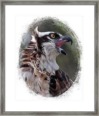 Calling Osprey Framed Print