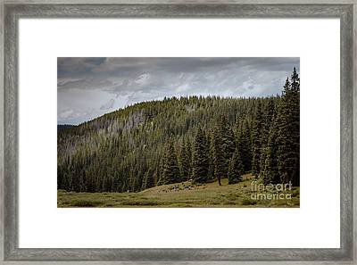 Calm Before The Storm Ll Framed Print