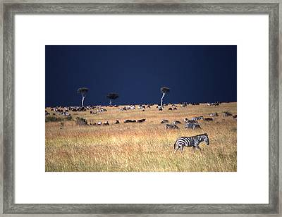 Calm Before The Storm Framed Print by Wade Worsley