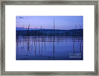 Calm Evening By A Moist Lake In Finland Framed Print by Mikko Palonkorpi