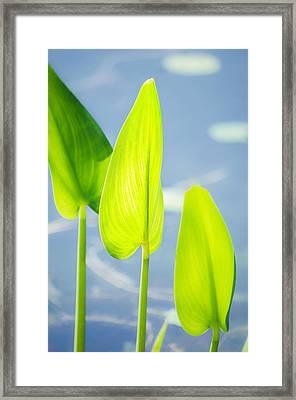 Calm Greens Framed Print