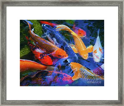 Calm Koi Fish Framed Print