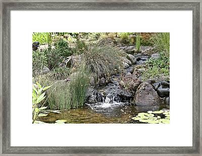 Calming Pond Framed Print by Liz Santie