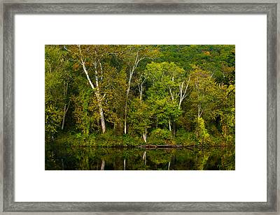 Calming Trees Framed Print