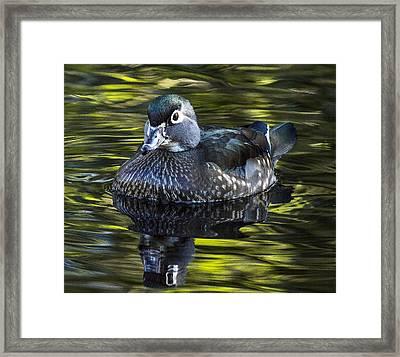 Calmness On The Water Framed Print