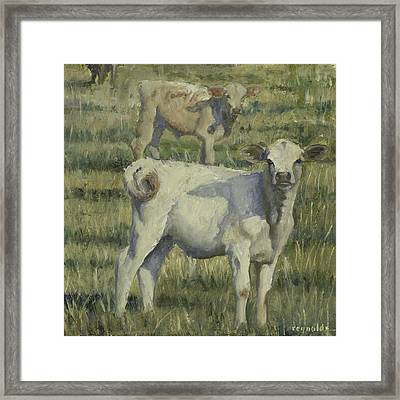 Framed Print featuring the painting Calves In The Pasture by John Reynolds