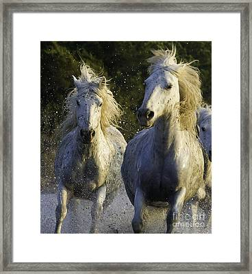 Camargue Spray Framed Print by Carol Walker