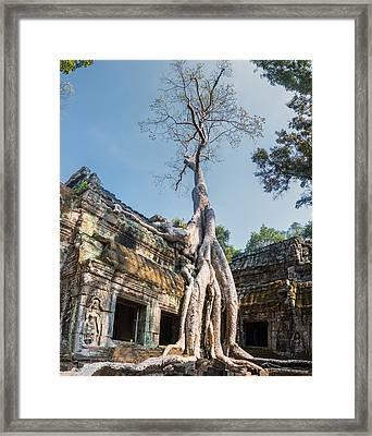 Cambodia Angkor Wat Tree Roots Framed Print by Cory Dewald