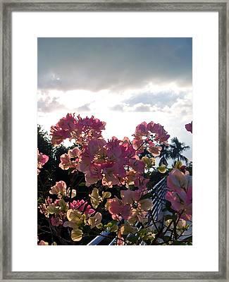 Cambodian Coastal Flowers Framed Print by Megan Czerwinski