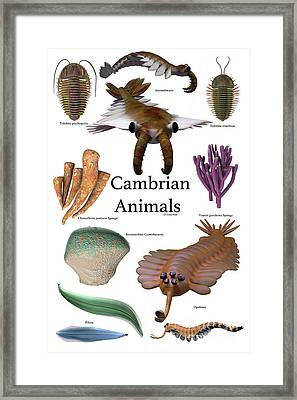 Cambrian Animals Framed Print by Corey Ford