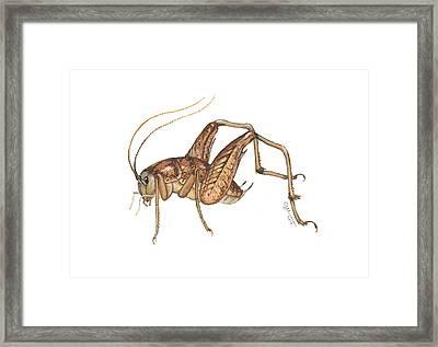Camel Cricket Framed Print