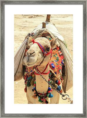Framed Print featuring the photograph Camel by Silvia Bruno