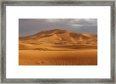 Framed Print featuring the photograph Camel Trek by Ramona Johnston