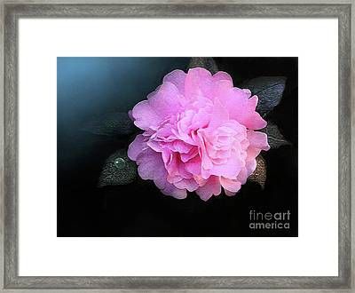 Camelia Framed Print by Robert Foster